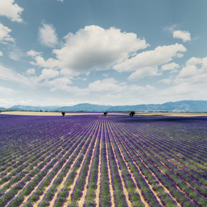 France - Provence - Valensole - above the Lavender Field