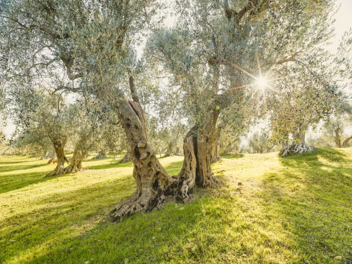 The magical place where the olive nere al forno grow © by Gerry Pacher