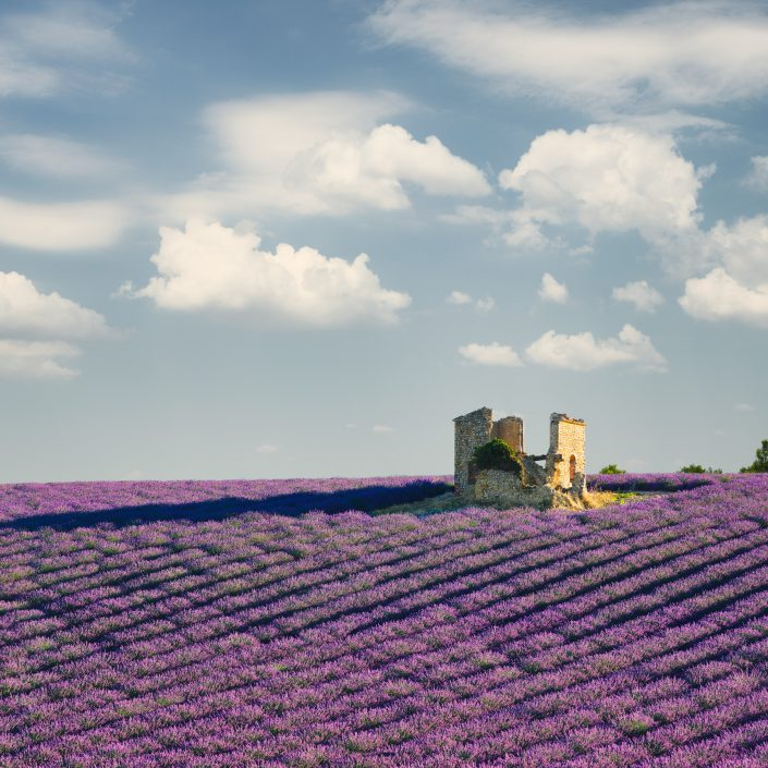 France - Provence - Valensole - abandoned house in a lavender field © by Gerry Pacher