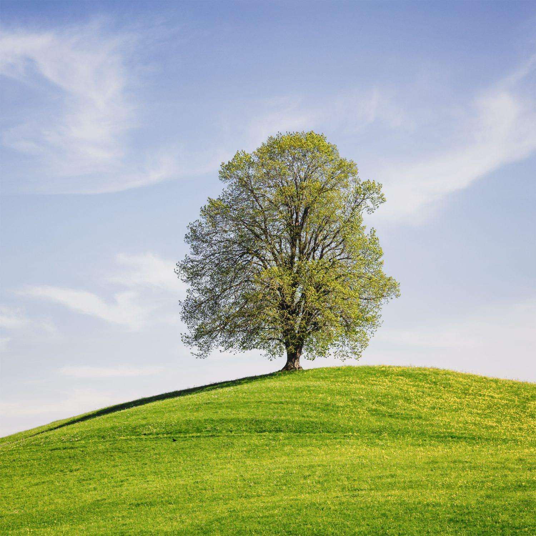 Frühling - Drumlin mit Baum © by Gerry Pacher