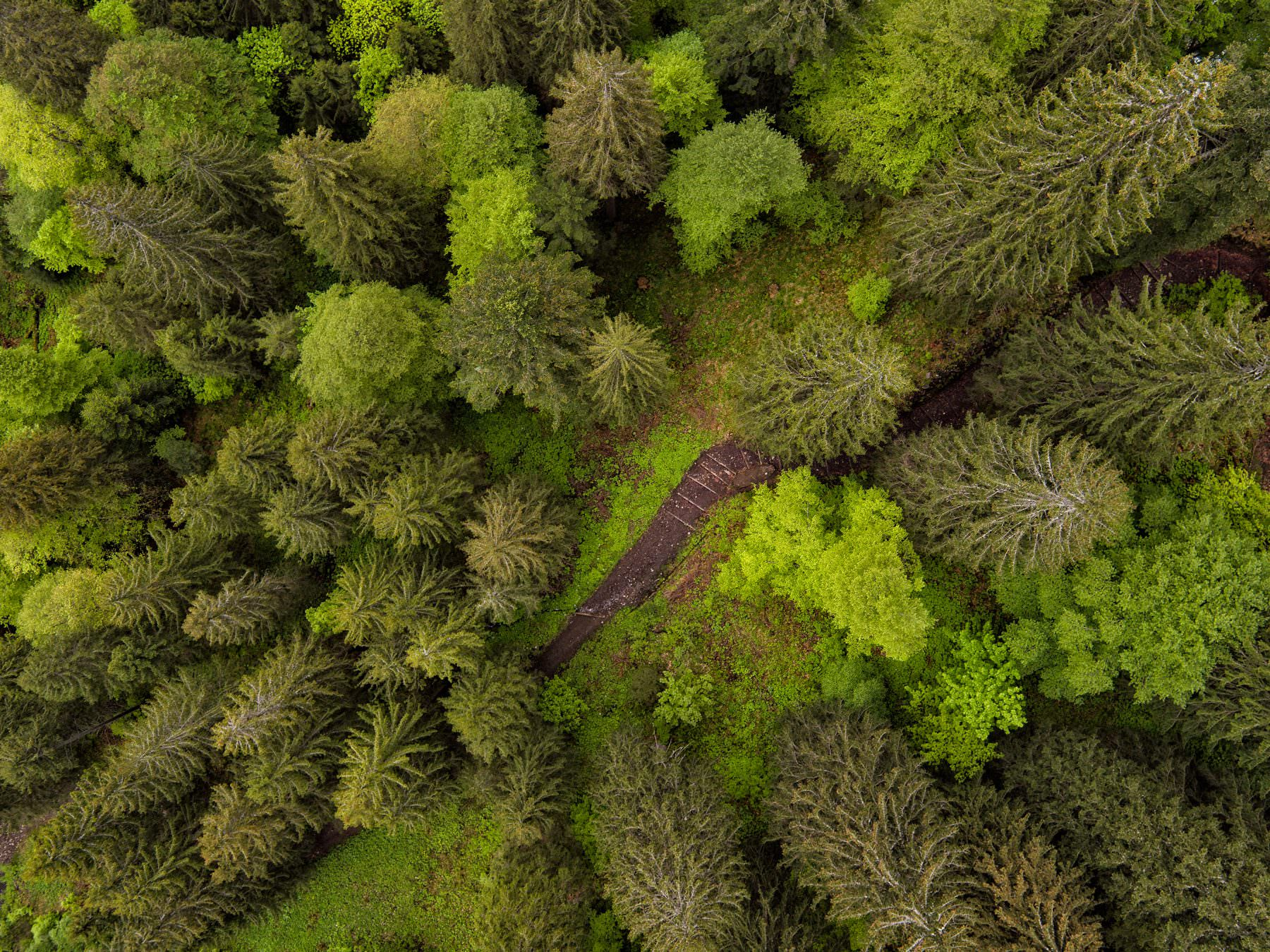 drone aerial photograph above a fresh green spring forrest © by Gerry Pacher