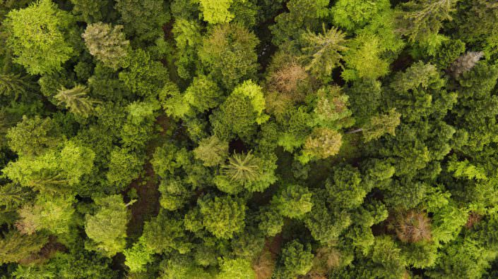 Drone aerial photograph above a spring forrest © by Gerry Pacher
