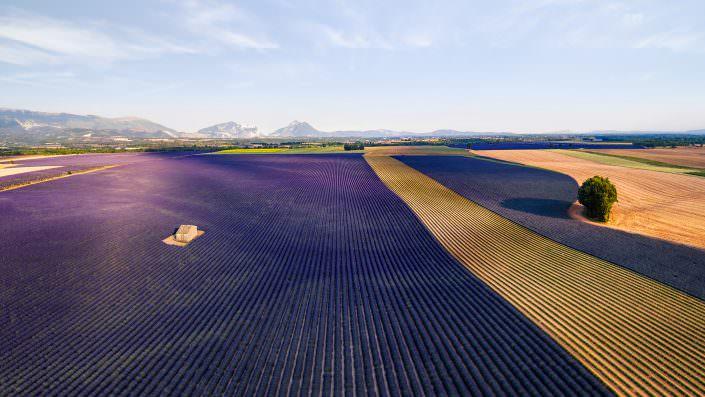 Luftaufnahme Lavenderfeld Frankreich Provence Vasensole © by Gerry Pacher