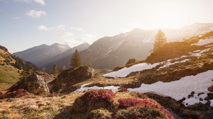 Die kräftige Morgensonne lässt den Schnee schmelzen und die Vegetation spriessen.