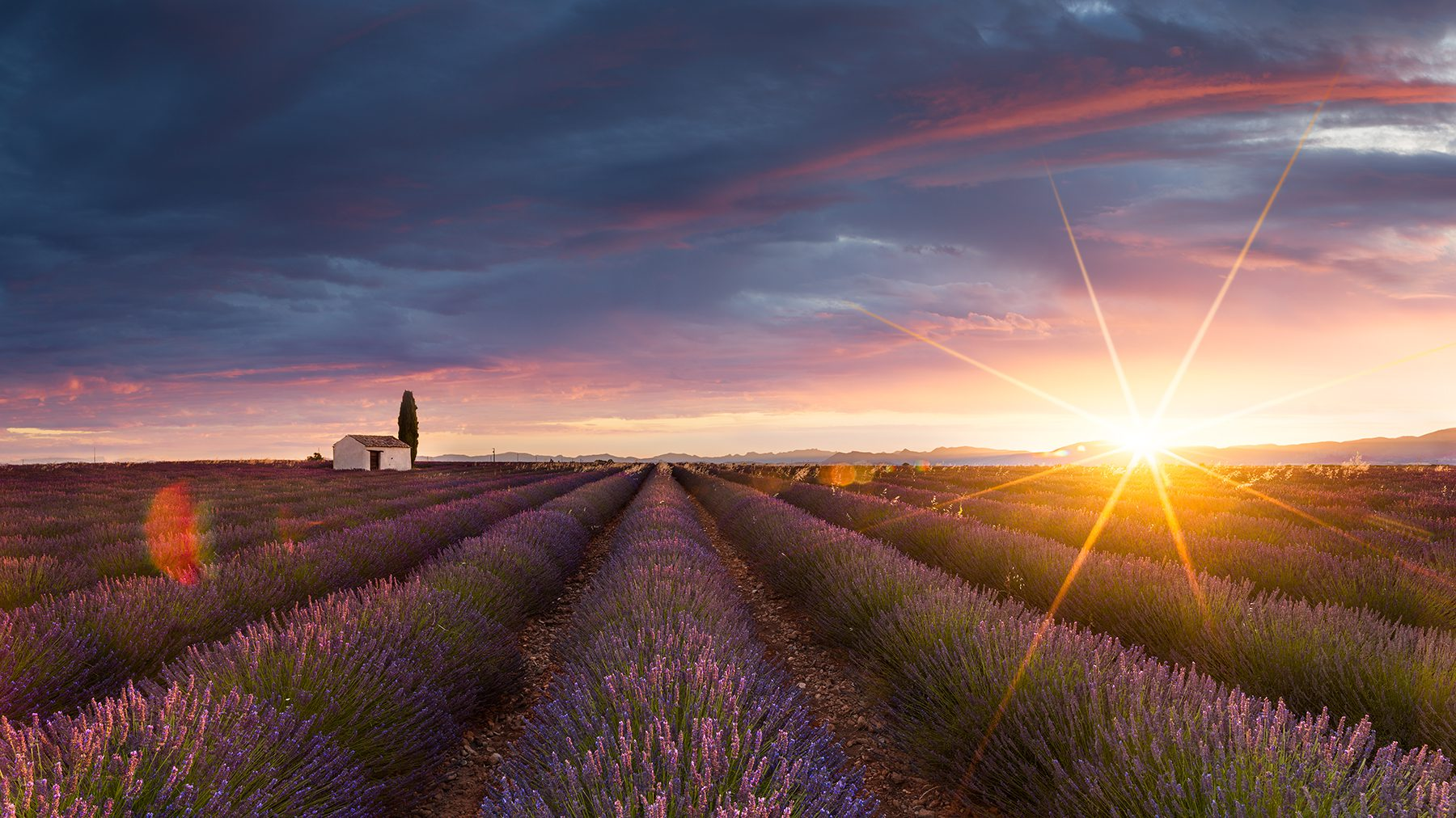 France, Valensole, Lavender, Field, Sunrise © by Gerry Pacher