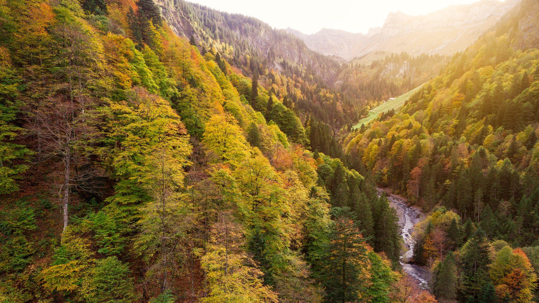 Herbst im Sihltal / Schwyz / Unteriberg / Stunden / Ochsenboden / Untersihl