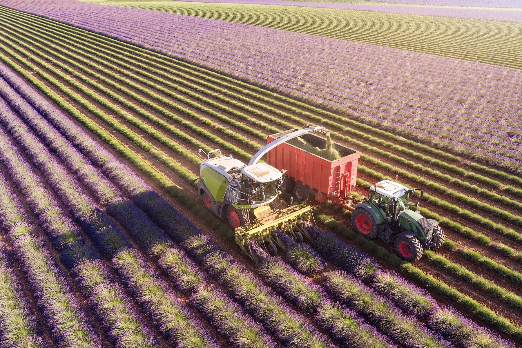 Lavender harvest at Valensole, Provence, France / aerial photograph