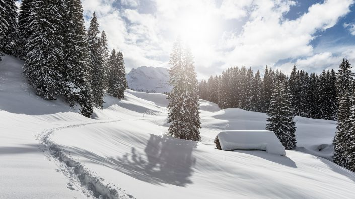 Winter - frischer Schnee im Muotathal Bödmerenwald / -Urwald.